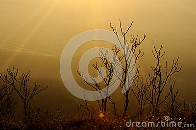 Dry herbs on sunset