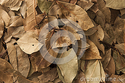 Dry Laurels