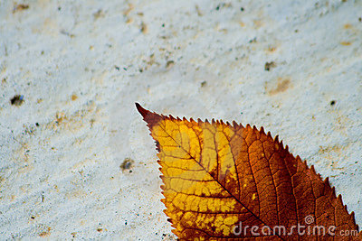Dry leaf on a concrete