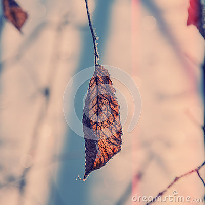 Free Dry Leaf On A Branch Royalty Free Stock Images - 85674849
