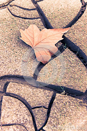 Free  Dry Leaf On Dry Ground - Toned Image Stock Photography - 96814182