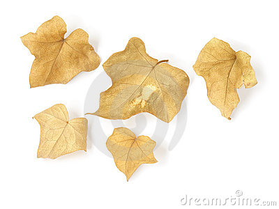 Dry leaves - 1