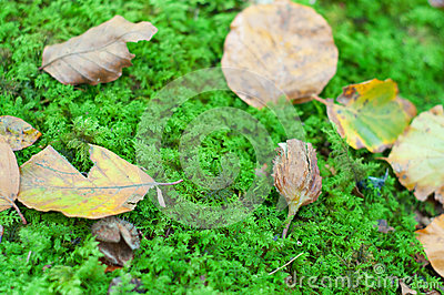 Dry leaves in te ground, covered on moss