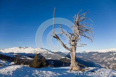 Dry lonely tree