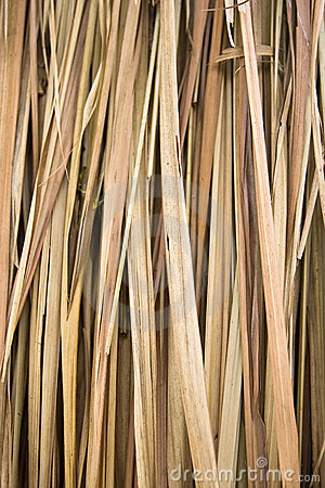 Free Dry Palm Leaves Stock Image - 13870081
