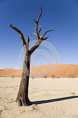 Free Dry Planet Stock Photo - 2068530