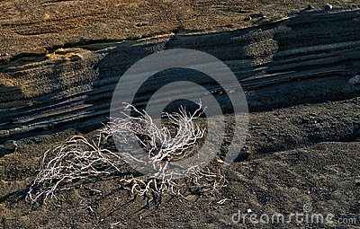 Dry plant near layers of volcanic soil