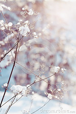 Free Dry Plants In Snow Royalty Free Stock Photo - 28099685