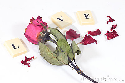 Dry red pink rose with love character text
