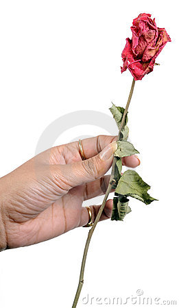 Dry rose stick