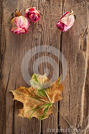 Dry roses and maple leaf on old wooden background