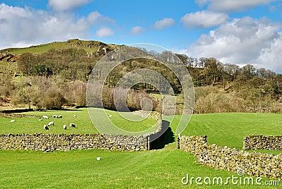 Dry stone walls surrounding pastures