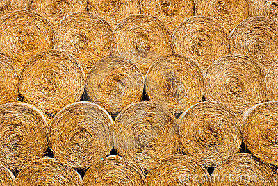 Dry straw texture