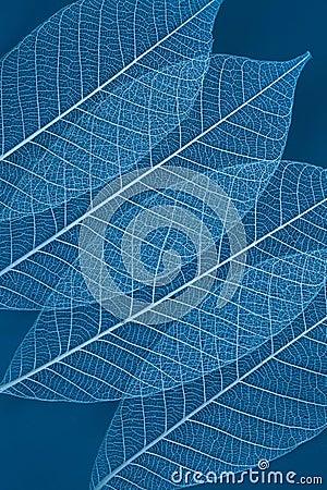 Free Dry Transparent Leaf Stock Photo - 22016190