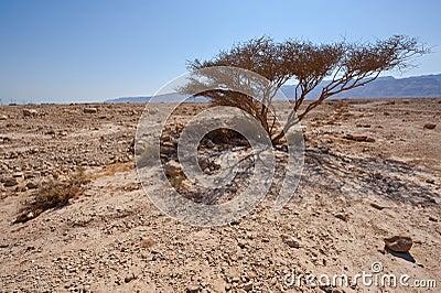 Dry Tree