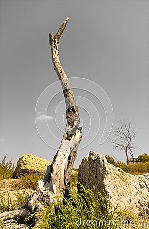 Dry tree image