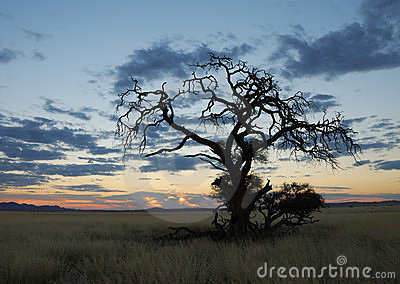 Dry Tree in Namibian Sundown