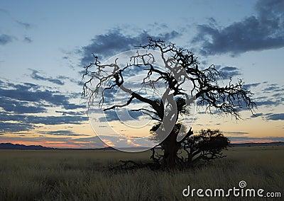 Dry Tree in Namibian Sundown