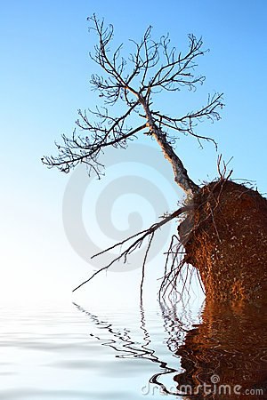 Dry tree on rock