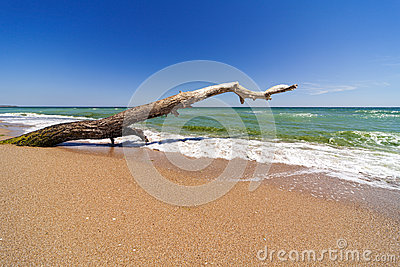 Dry tree on sandy beach