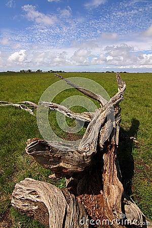 dry tree trunk
