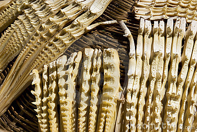 Drying of Bamboo Shoots
