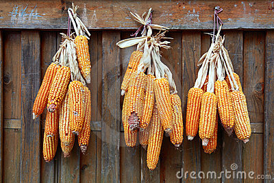 Drying Corn Cobs II
