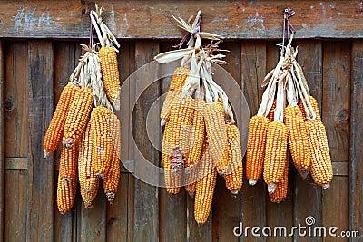 Drying Corn Cobs II