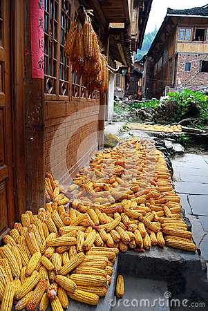 Drying corns at farmhouse, China