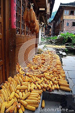 Drying corns at farmhouse, China