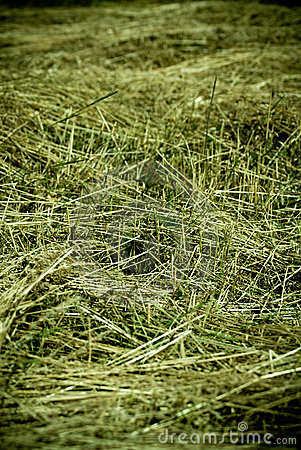 Free Drying Hay Royalty Free Stock Images - 2742859