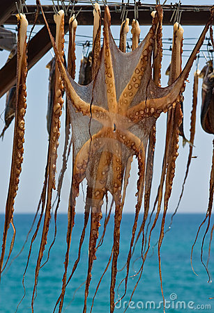 Drying octopus