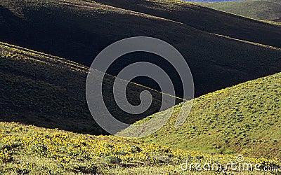Dryland Hills in Spring