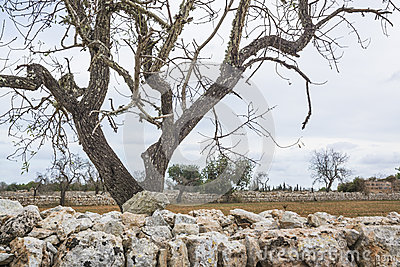 Drystone wall and tree landscape
