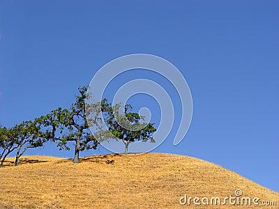 Drzewa kalifornijskie wzgórz