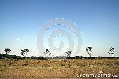 Drzewa pustkowie