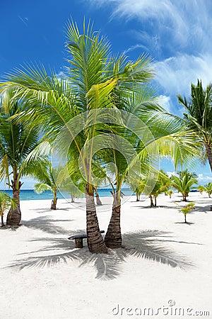 Drzewka palmowe na raj wyspie