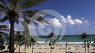 Drzewka palmowe przy piękną plażą Ft Lauderdale usa pejzaże miejscy zbiory wideo