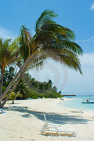 Drzewko palmowe plażowa woda