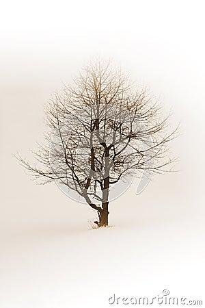 Drzewna zima