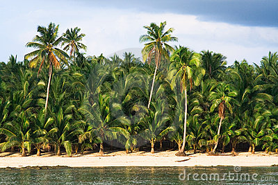 Drzewo tropikalne palm raju