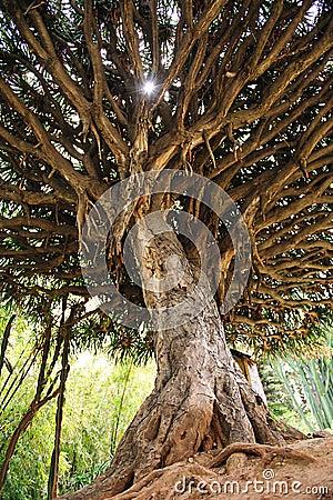 Drzewo tropikalny