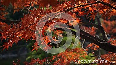 Dsc01345 Free Public Domain Cc0 Image