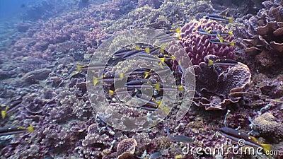 Dużo łowią na dnie morskim w podwodnym świacie przyroda Filipiny zbiory wideo
