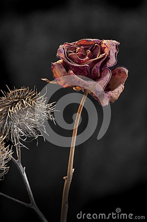 Duality of wilting rose and thistle