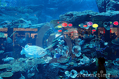 Dubai Aquarium & Underwater Zoo Editorial Image