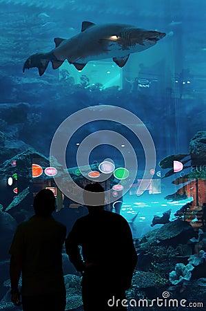 Dubai Aquarium & Underwater Zoo Editorial Photo