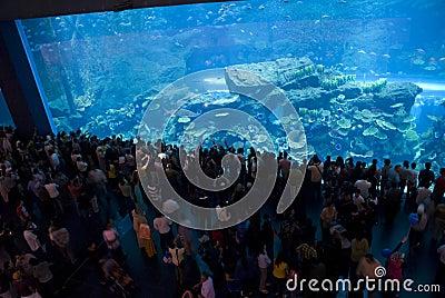 Dubai Mall Aquarium Editorial Photo