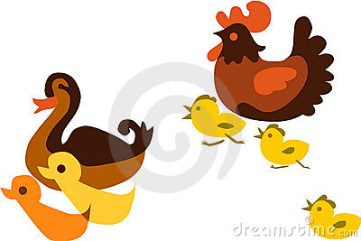 Duck chicken and their children,  illustrati
