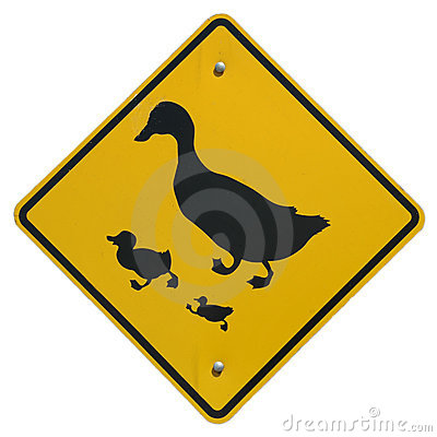 Free Duck Crossing Stock Photography - 240302